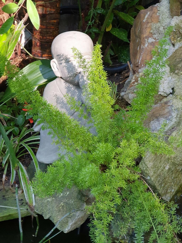 Rémi - Mon (tout) petit jardin en mode tropical - Page 20 20210563