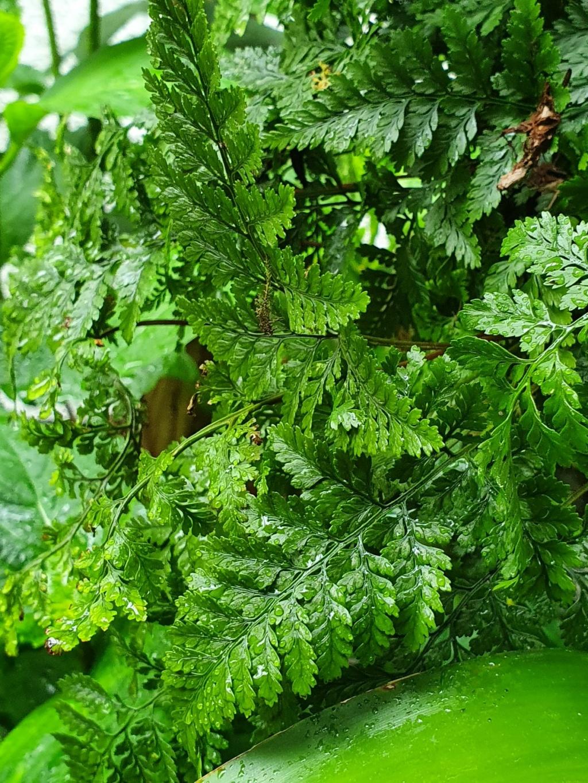 Rémi - Mon (tout) petit jardin en mode tropical - Page 20 20210564