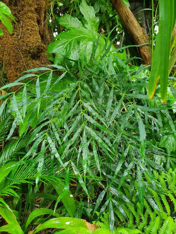 Rémi - Mon (tout) petit jardin en mode tropical - Page 20 20210566