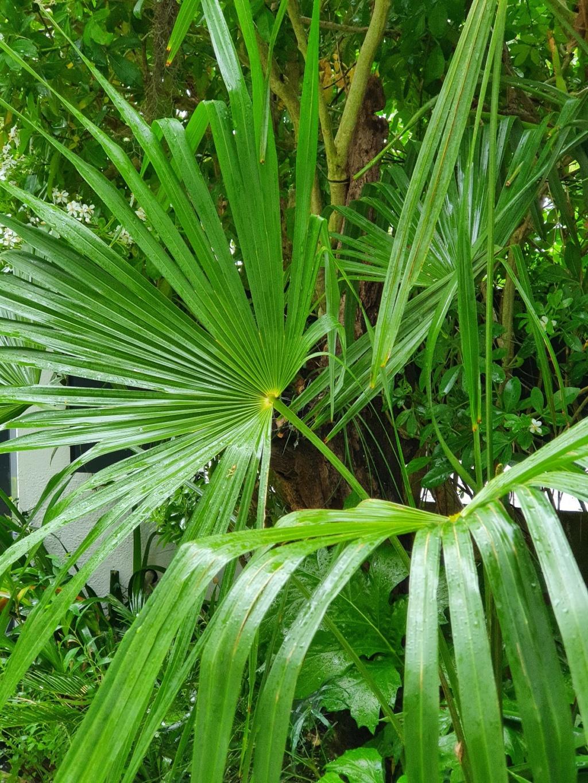 Rémi - Mon (tout) petit jardin en mode tropical - Page 20 20210568