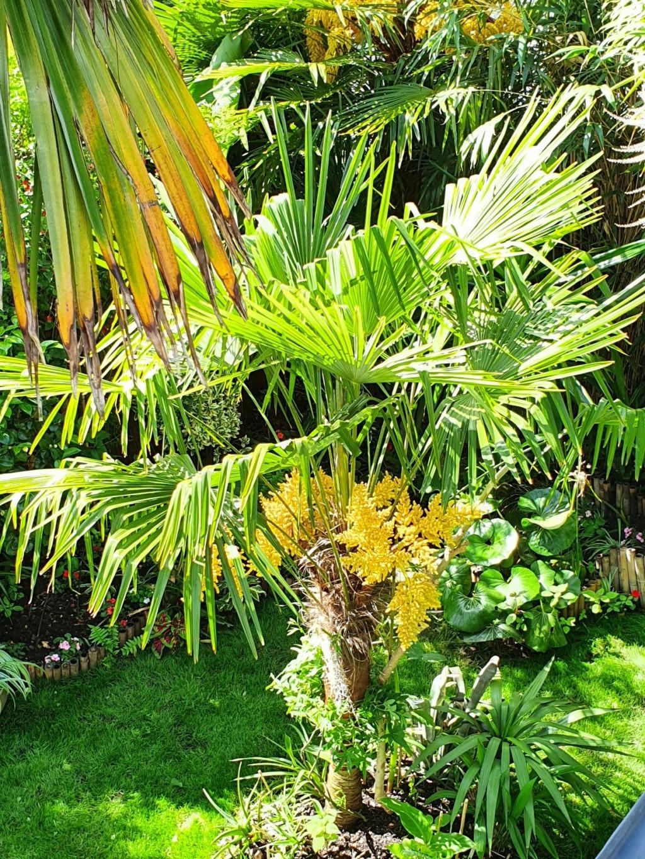 Rémi - Mon (tout) petit jardin en mode tropical - Page 20 20210630