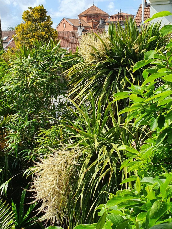 Rémi - Mon (tout) petit jardin en mode tropical - Page 20 20210631