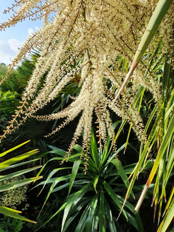 Rémi - Mon (tout) petit jardin en mode tropical - Page 20 20210632