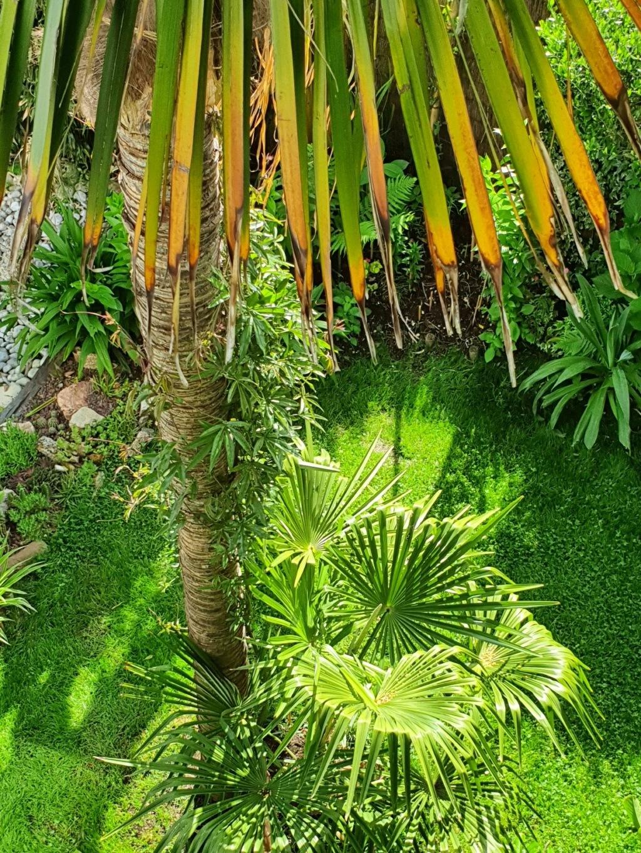 Rémi - Mon (tout) petit jardin en mode tropical - Page 20 20210633