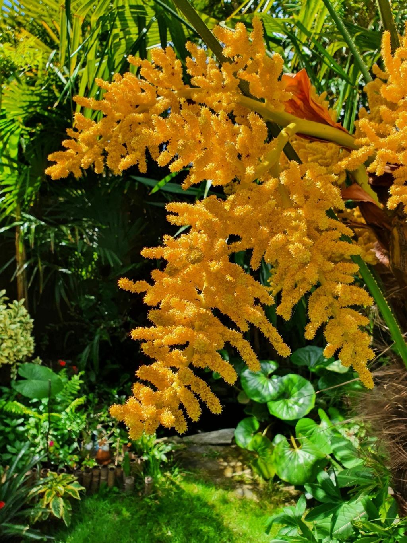 Rémi - Mon (tout) petit jardin en mode tropical - Page 20 20210636