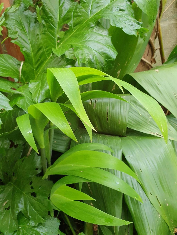 Rémi - Mon (tout) petit jardin en mode tropical - Page 20 20210640