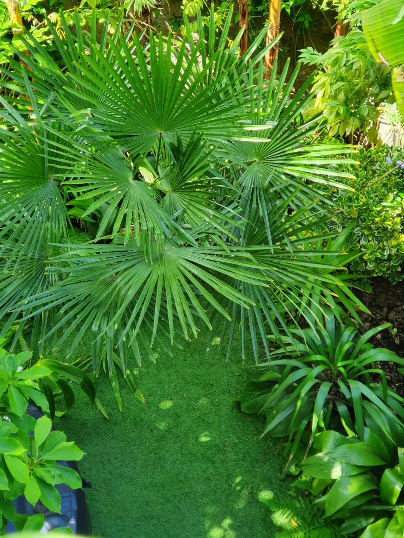 Rémi - Mon (tout) petit jardin en mode tropical - Page 20 20210641