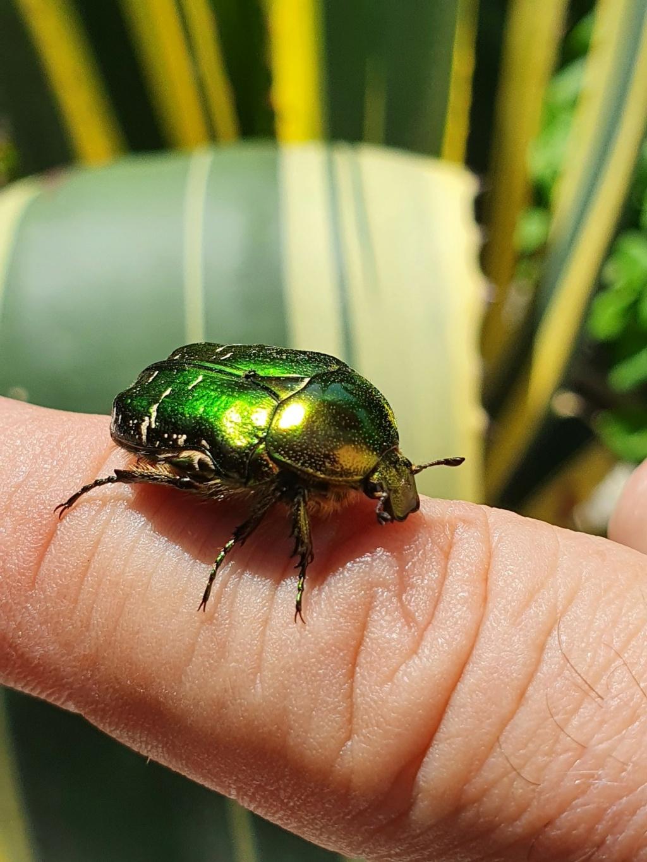 A vos insectes 20210704