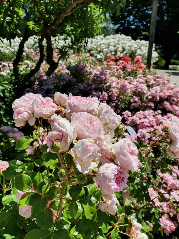 (44) Parc Floral de la Beaujoire - Nantes 20210760