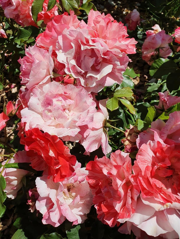 (44) Parc Floral de la Beaujoire - Nantes 20210761