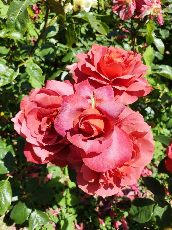 (44) Parc Floral de la Beaujoire - Nantes 20210762