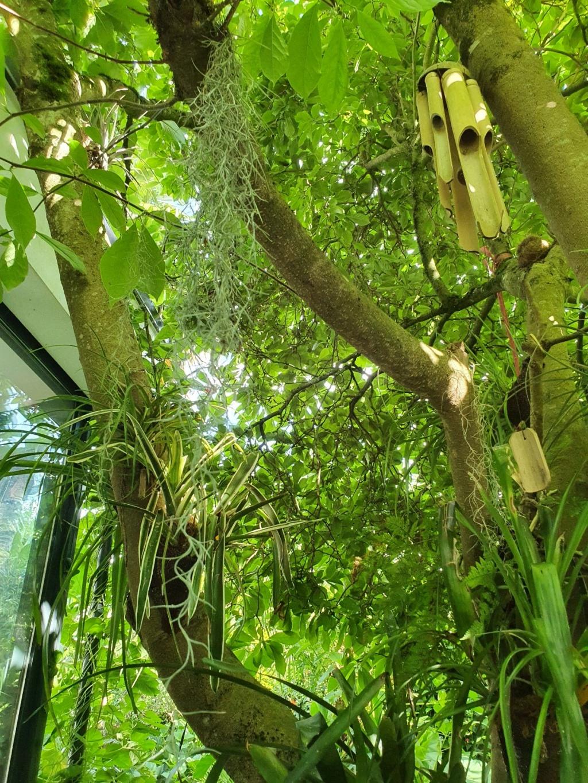 Support à épiphytes et broméliacées rustiques - Page 8 20210865