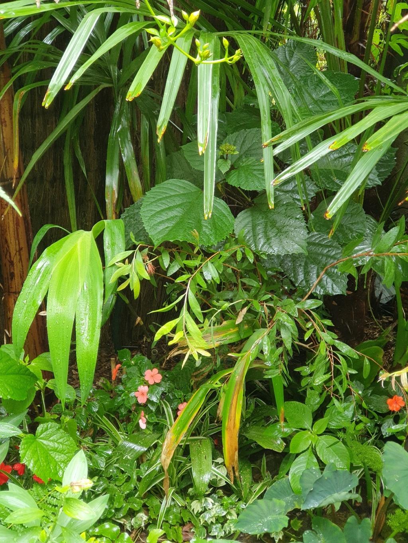 Rémi - Mon (tout) petit jardin en mode tropical - Page 21 20210892
