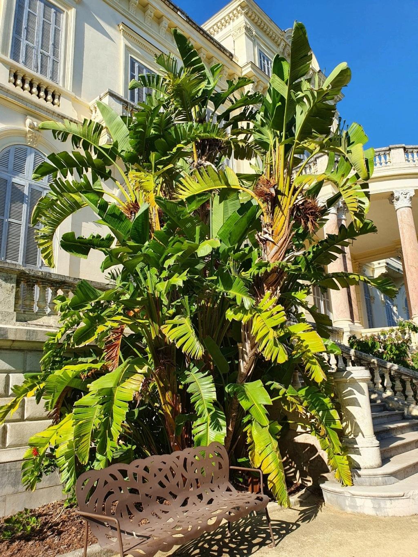 (06) Parc de la Villa Rothschild à  Cannes  20210944