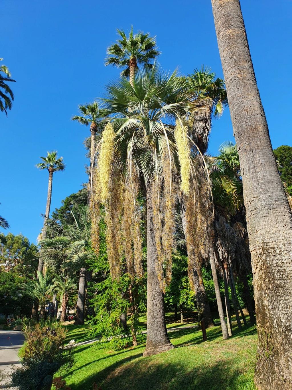 (06) Parc de la Villa Rothschild à  Cannes  20210947