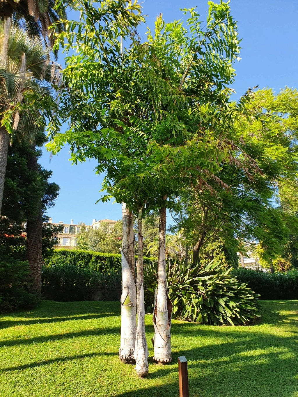 (06) Parc de la Villa Rothschild à  Cannes  20210950