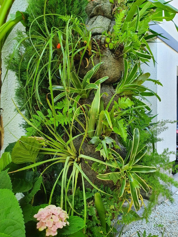 Support à épiphytes et broméliacées rustiques - Page 8 20210960