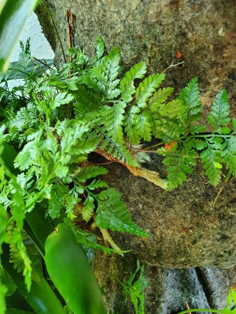 Support à épiphytes et broméliacées rustiques - Page 8 20210961
