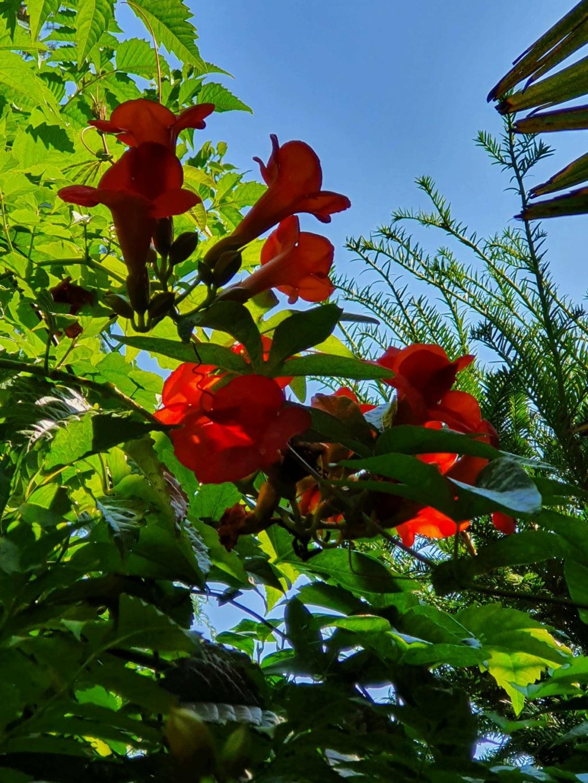Rémi - Mon (tout) petit jardin en mode tropical - Page 21 20210989