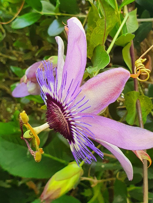 Rémi - Mon (tout) petit jardin en mode tropical - Page 21 20210990