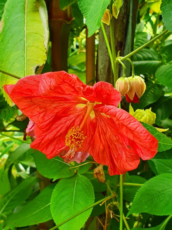Rémi - Mon (tout) petit jardin en mode tropical - Page 21 20210991