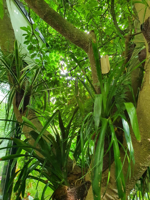 Rémi - Mon (tout) petit jardin en mode tropical - Page 21 20210998