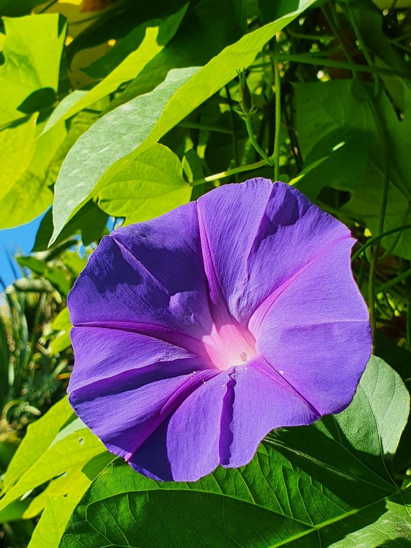 Rémi - Mon (tout) petit jardin en mode tropical - Page 21 20211004