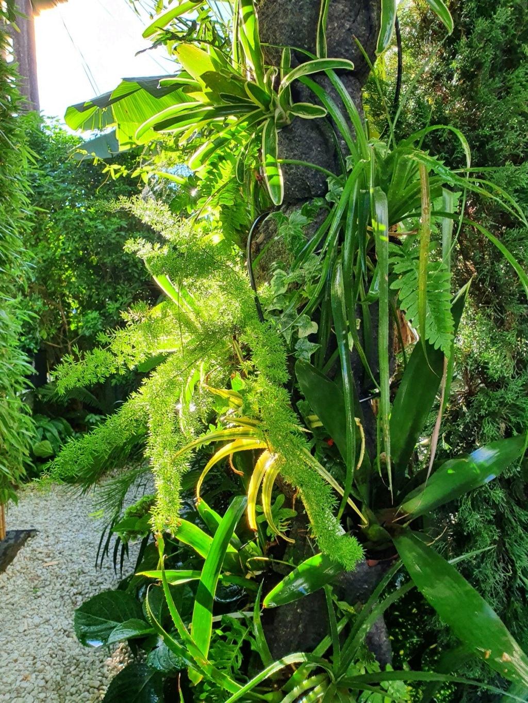 Rémi - Mon (tout) petit jardin en mode tropical - Page 21 20211005