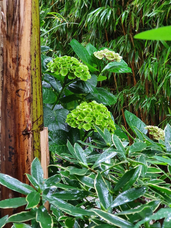 Rémi - Mon (tout) petit jardin en mode tropical - Page 21 20211082