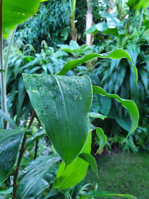 Rémi - Mon (tout) petit jardin en mode tropical - Page 21 20211083