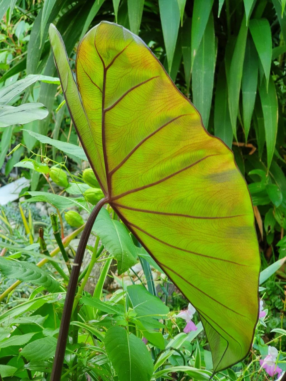 Rémi - Mon (tout) petit jardin en mode tropical - Page 21 20211084