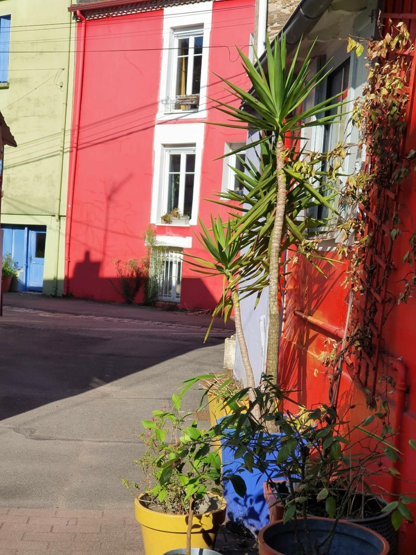 Village jardin exotique de Trentemoult (44) - Page 2 20211091