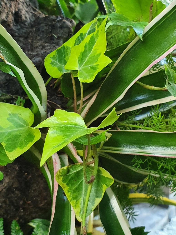 Rémi - Mon (tout) petit jardin en mode tropical - Page 21 20211140