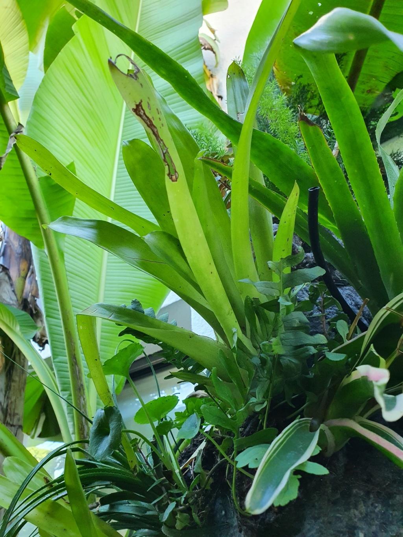 Rémi - Mon (tout) petit jardin en mode tropical - Page 21 20211141