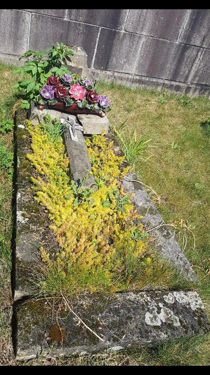 Au pied de mon arbre ... - Les cimetières pleins de vie - Page 2 Screen37