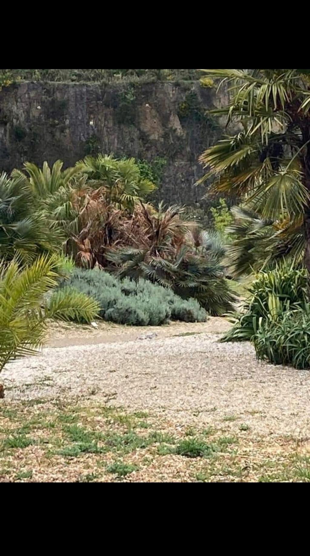 (44) Jardin Exotique de Pontpierre à Saint-Herblain - Page 4 Screen69