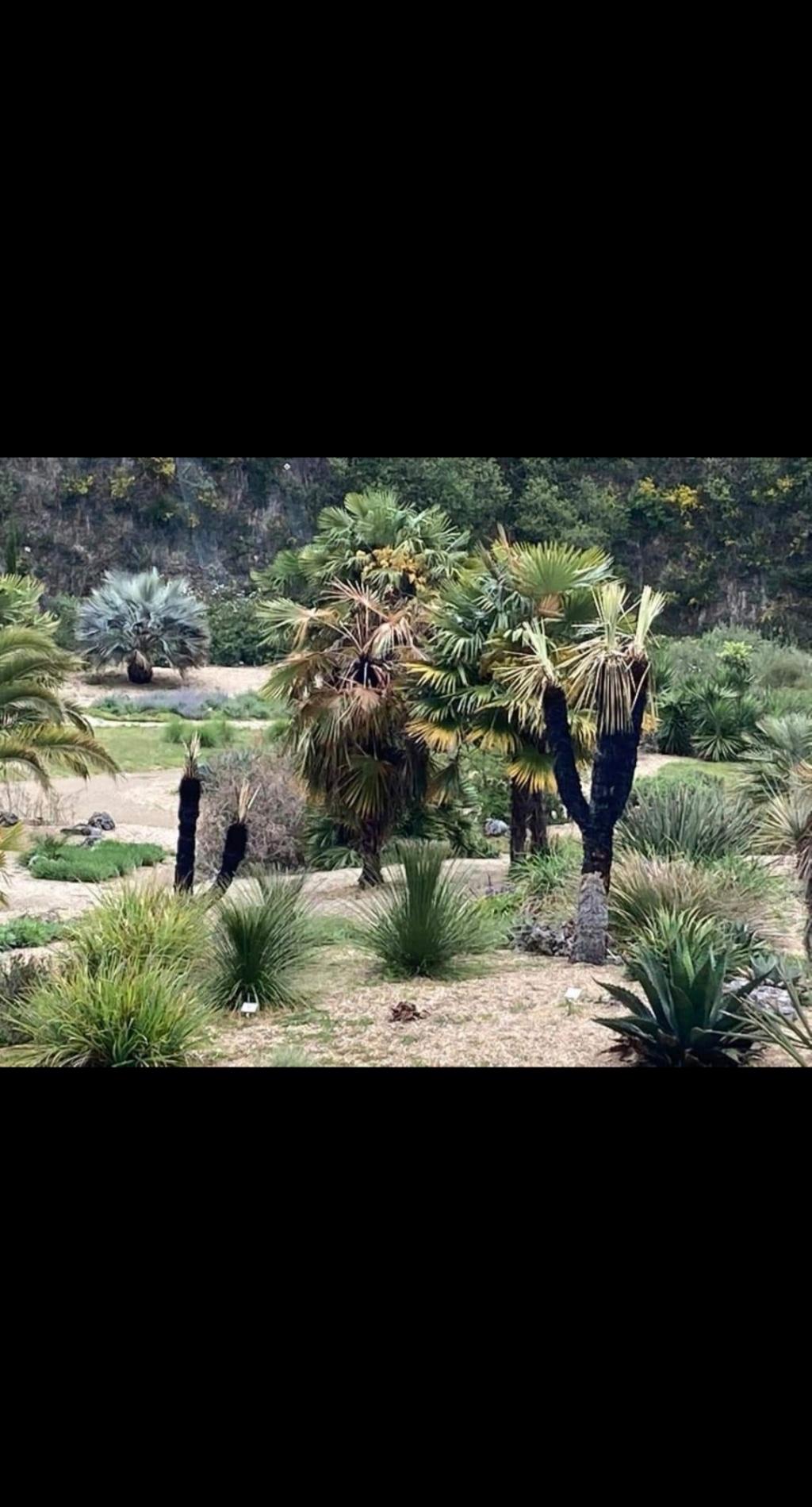 (44) Jardin Exotique de Pontpierre à Saint-Herblain - Page 4 Screen71