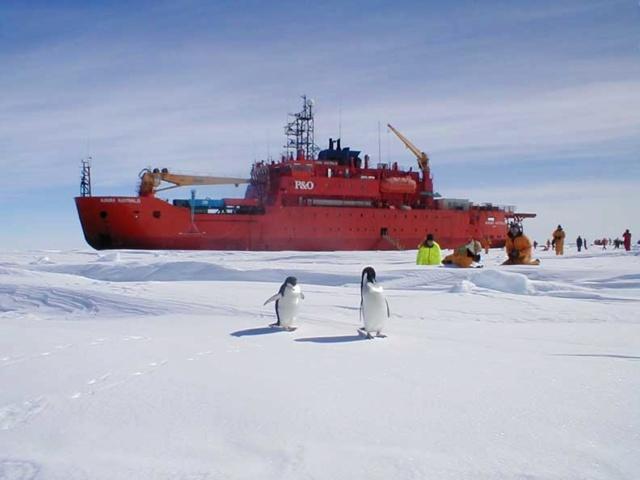 Eisbrecher: Aurora Australis und M.S.Icebird Aurora10