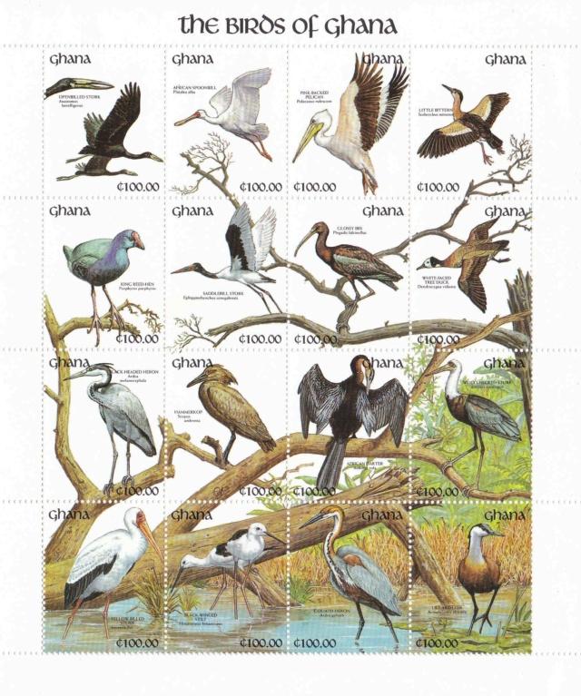 Kleinbogen Ghana Vögel Ghana_11
