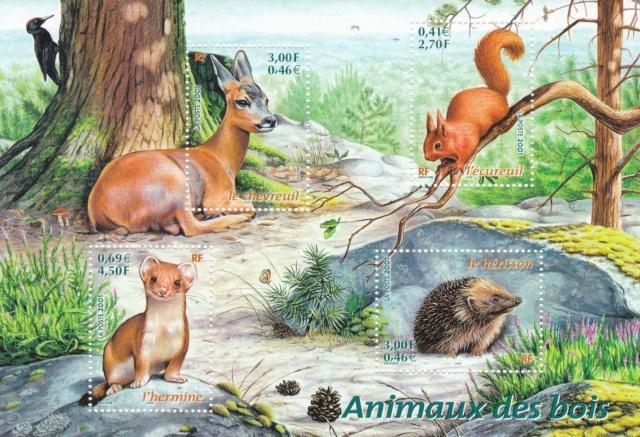 Tiere des Waldes  Img_2212