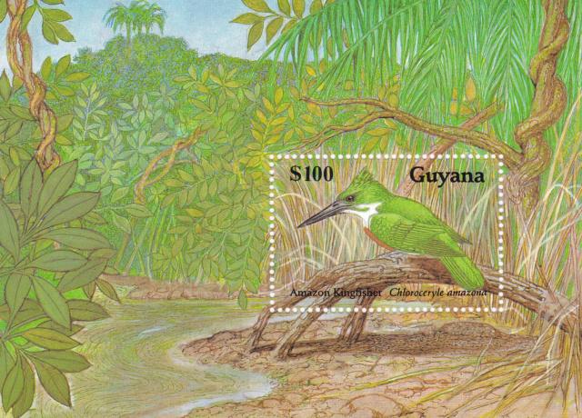 Eisvogel Südamerikas  Img_2214