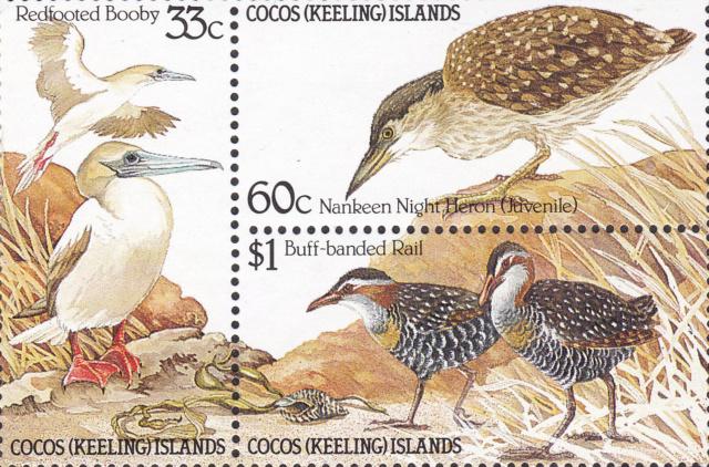 Kleinbogen Kokos-Inseln  Vögel Img_2227
