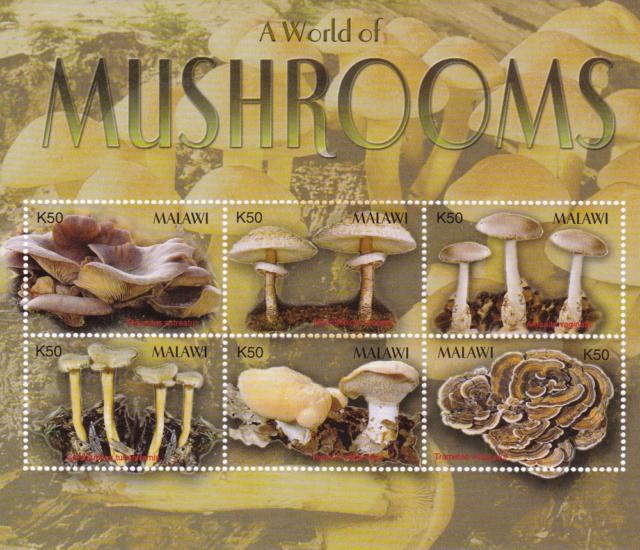 Pilze Malawi Img_2308