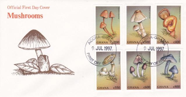 Pilze Ghana Img_2383