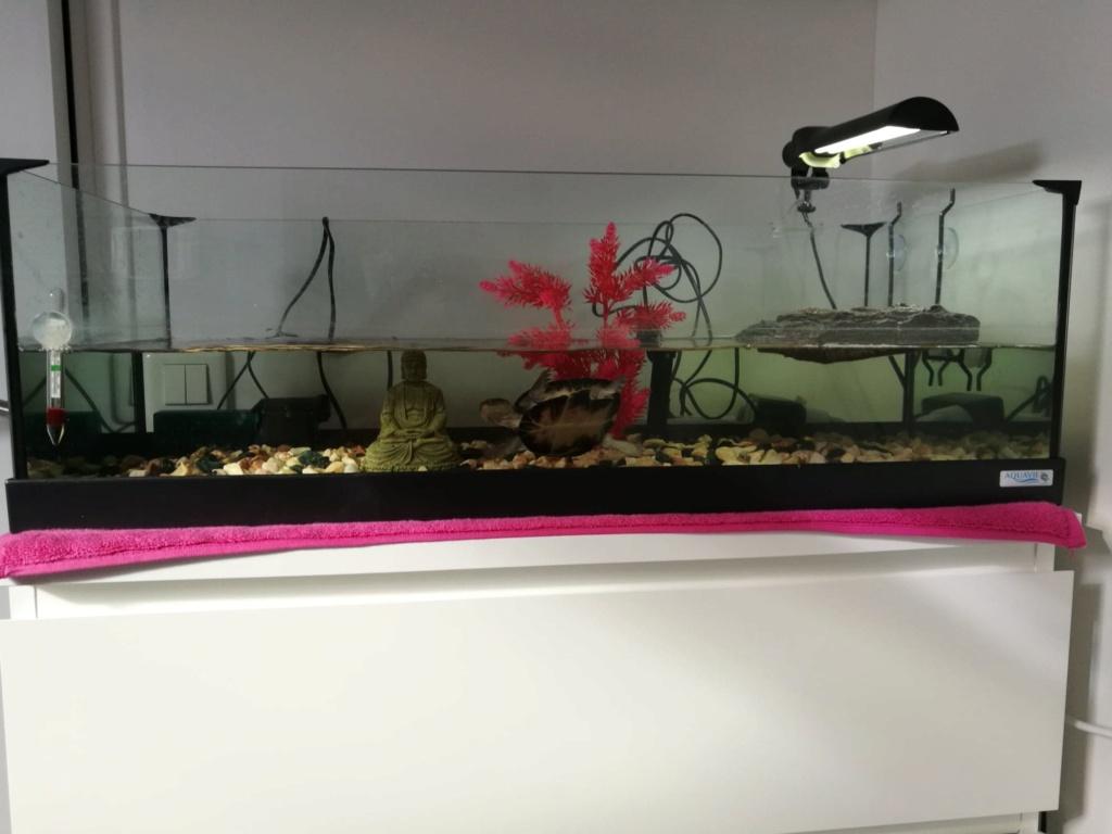 Tâches jaunes dorées sur carapace tortue d'eau Aquari10