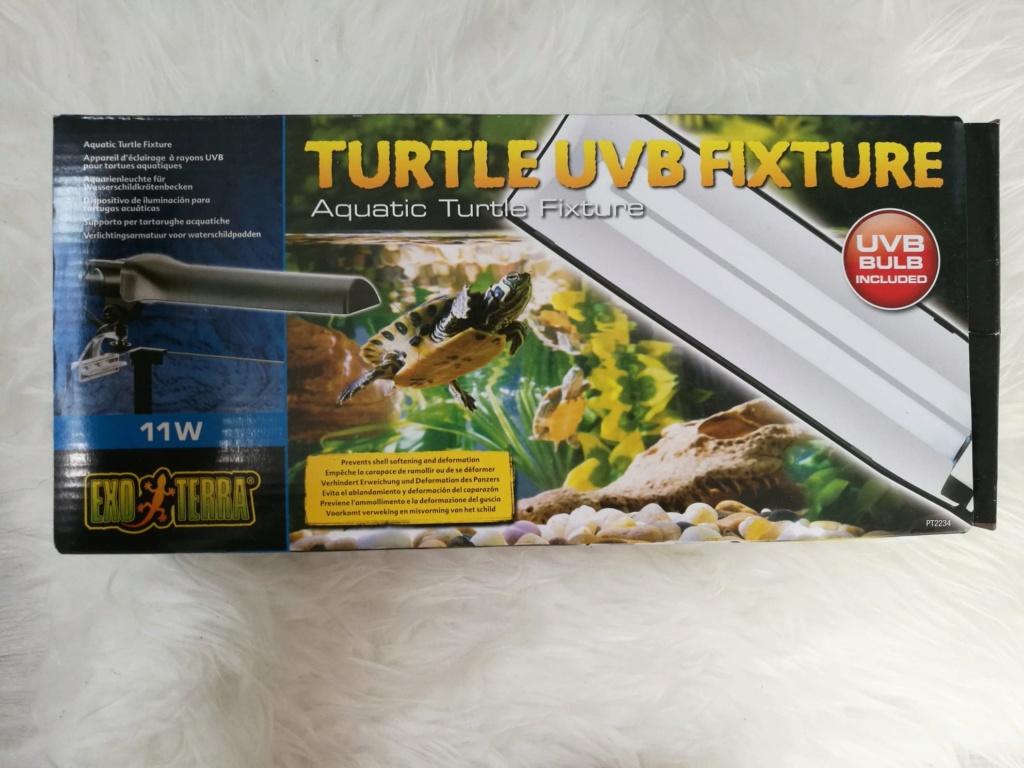 Tâches jaunes dorées sur carapace tortue d'eau Lampe10