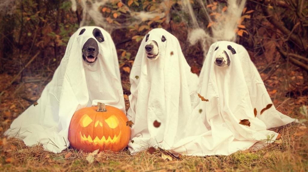 Votez pour vos décors d'halloween favoris! Hallow11