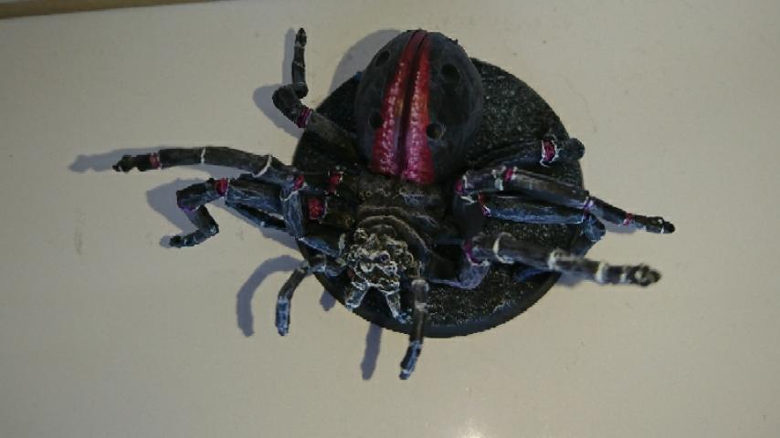 [Andrann i ùan - Novice] - Arachné Captur12