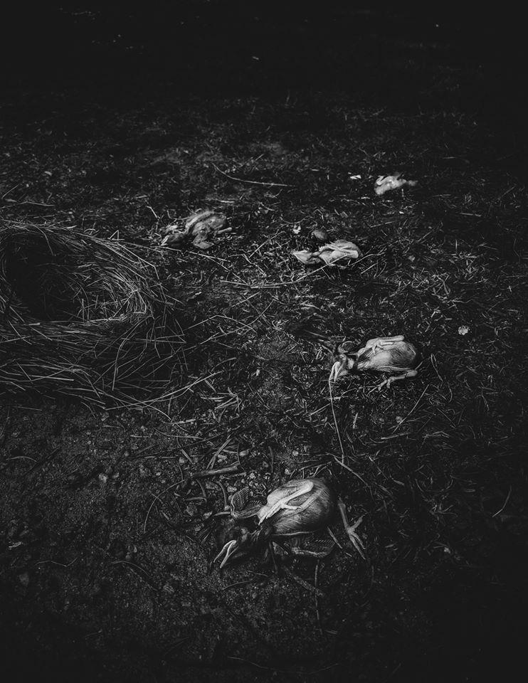 GRAVKVÄDE - (Black Metal /Suède) - Le prochain album pour l'automne 2020 10266110