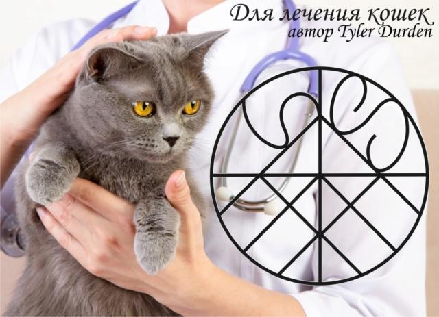 Для лечения кошек O10